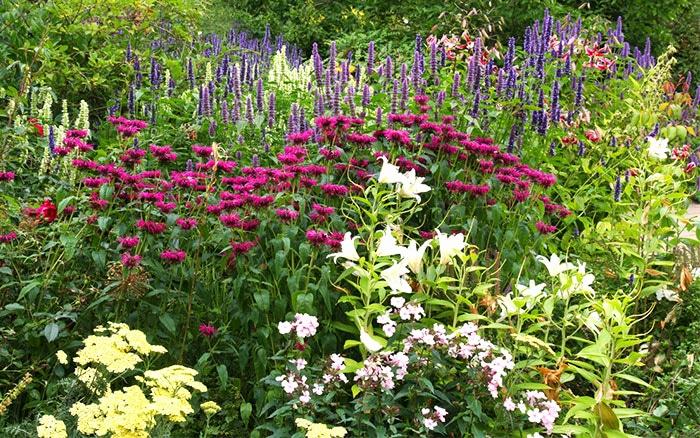 Patio Border Plants Flower Garden Borders 25 Garden Bed Borders