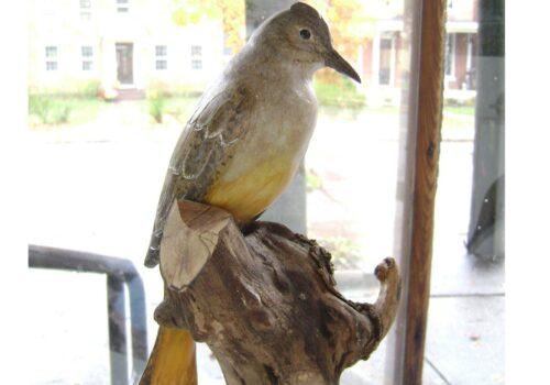 VAM-Bird by CJ Lyttle (2)